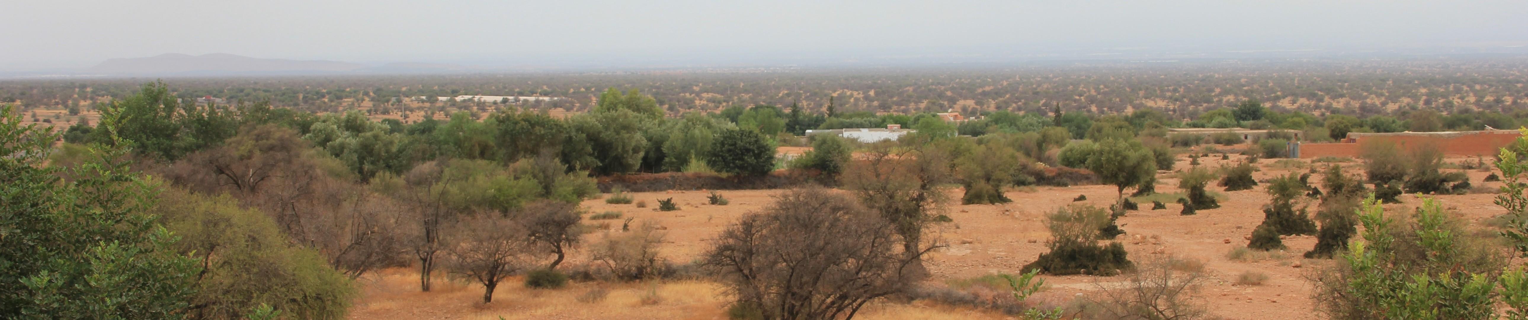 Région où sont produits l'argan et le safran